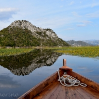 Monténégro : Lac de Skadarsko Jezero à l'automne
